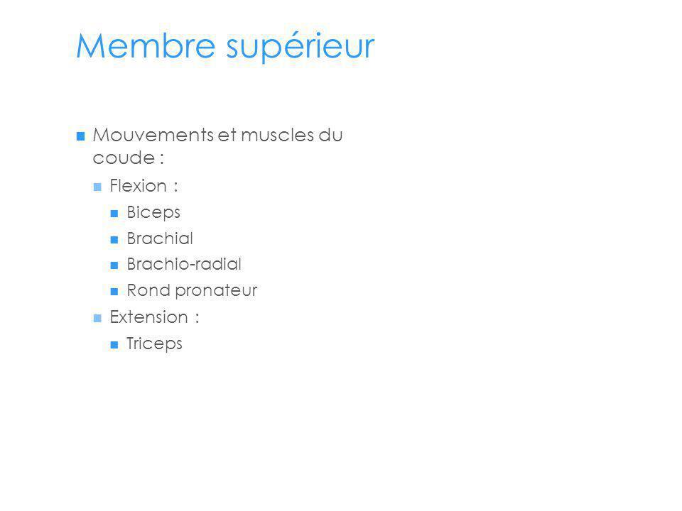 Membre supérieur Mouvements et muscles du coude : Flexion :