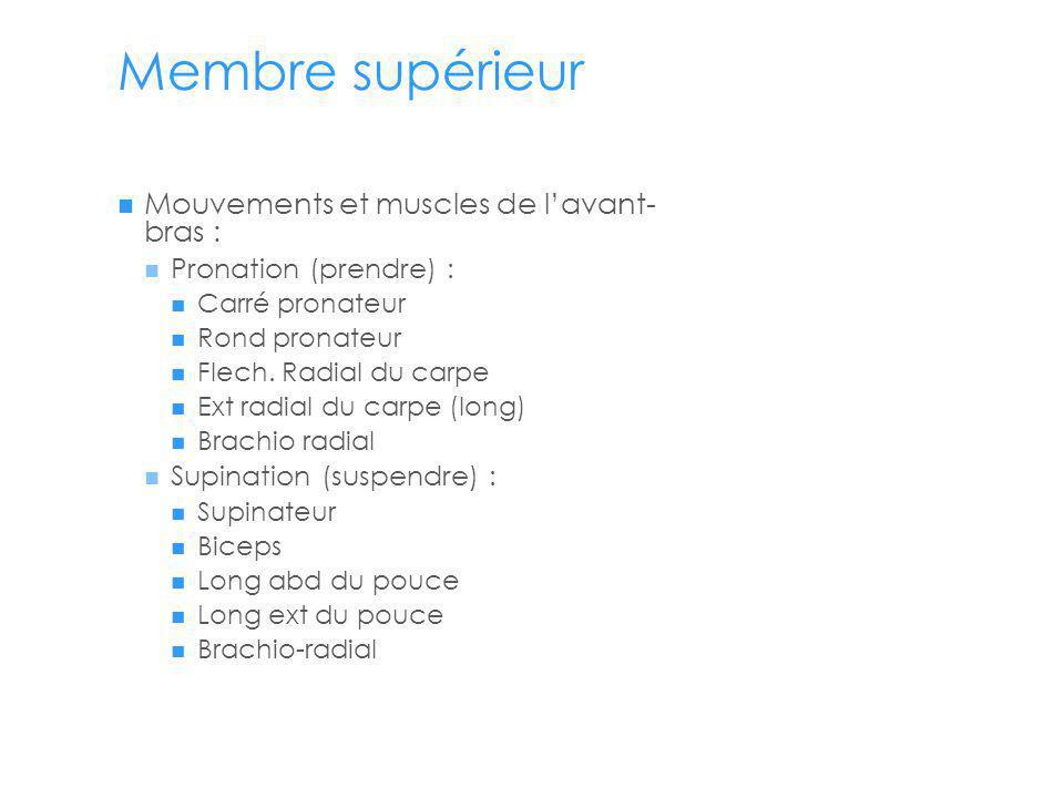 Membre supérieur Mouvements et muscles de l'avant- bras :