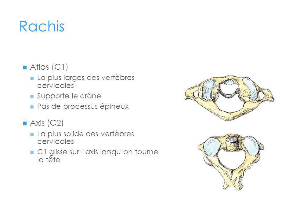 Rachis Atlas (C1) Axis (C2) La plus larges des vertèbres cervicales