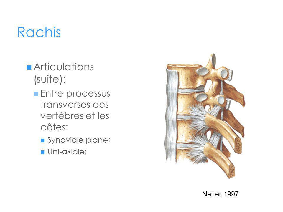 Rachis Articulations (suite):