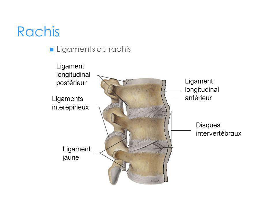 Rachis Ligaments du rachis Ligament longitudinal postérieur
