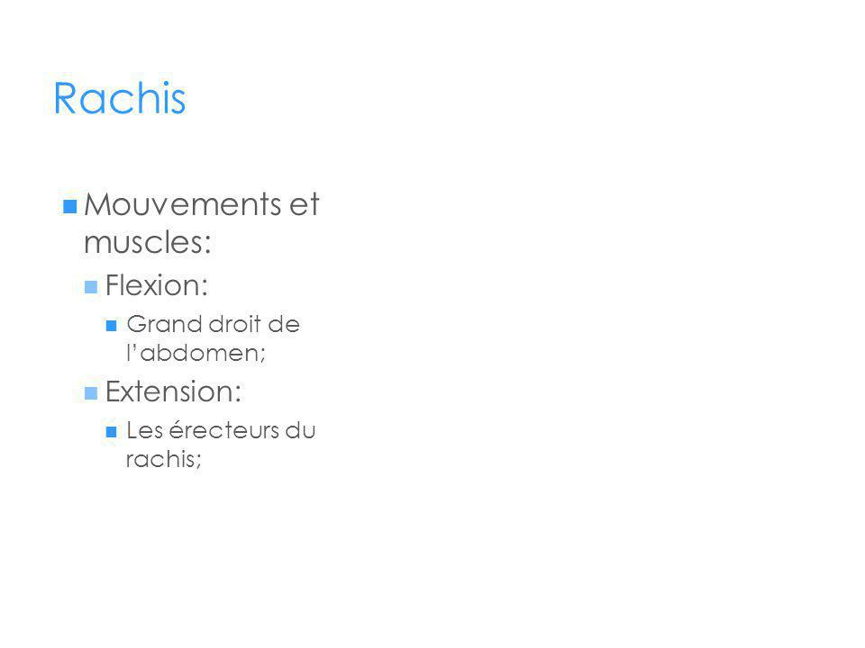 Rachis Mouvements et muscles: Flexion: Extension: