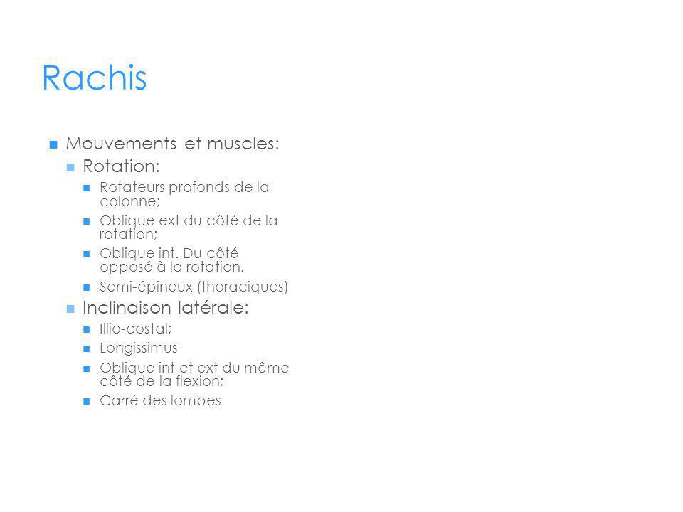 Rachis Mouvements et muscles: Rotation: Inclinaison latérale: