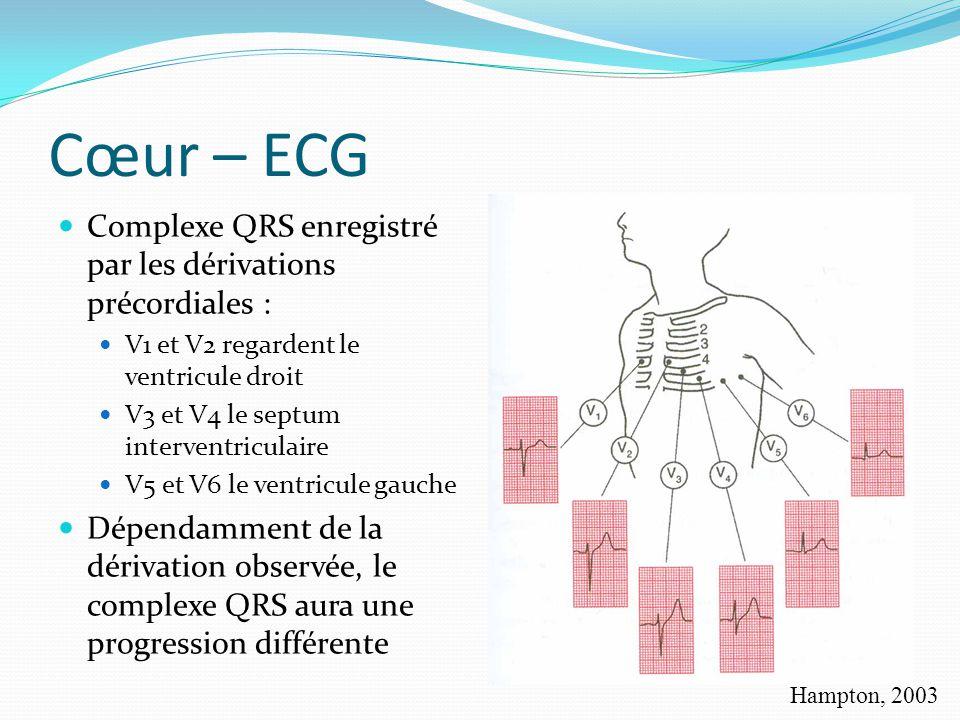 Cœur – ECG Complexe QRS enregistré par les dérivations précordiales :