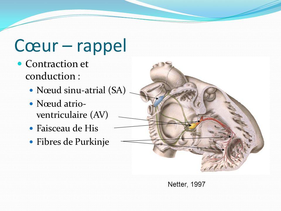 Cœur – rappel Contraction et conduction : Nœud sinu-atrial (SA)
