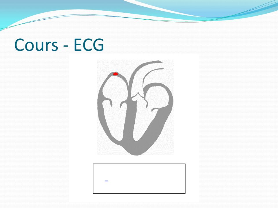 Cours - ECG