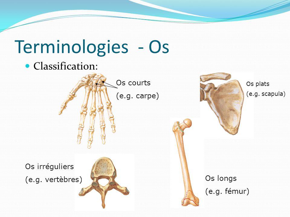 Terminologies - Os Classification: Os courts (e.g. carpe)