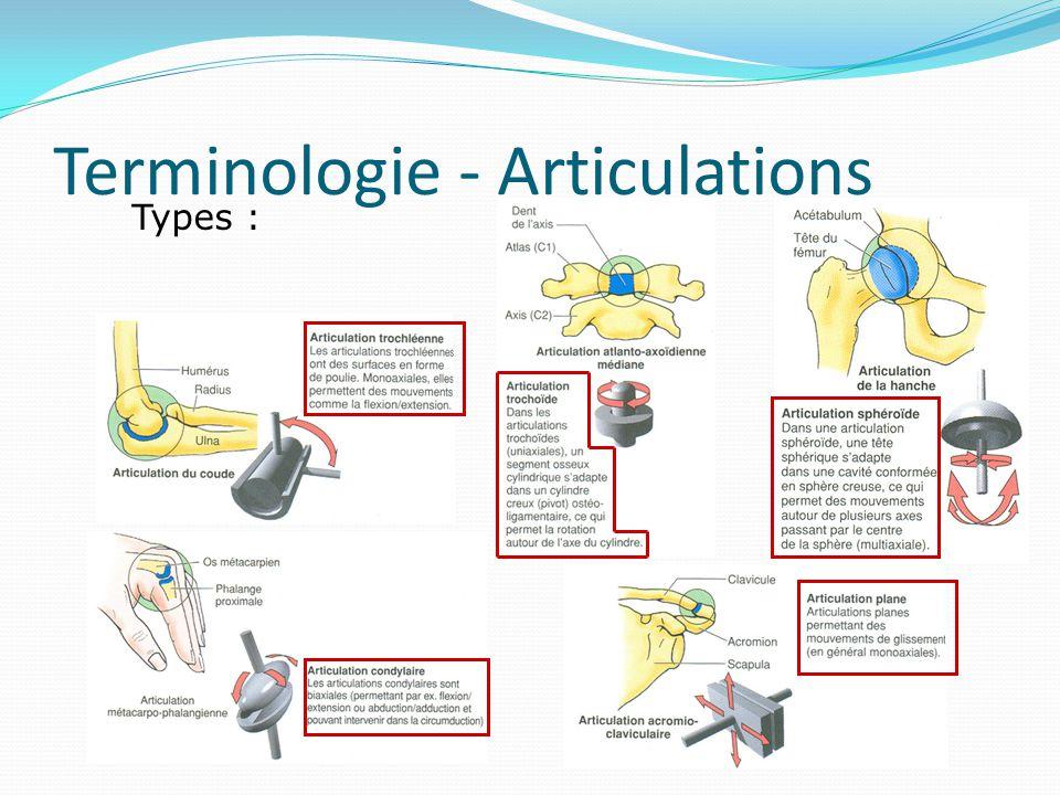 Terminologie - Articulations