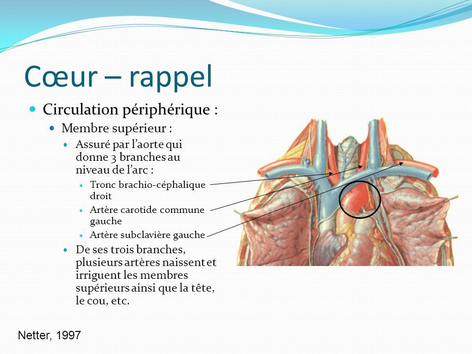 Cœur – rappel Circulation périphérique : Membre supérieur :