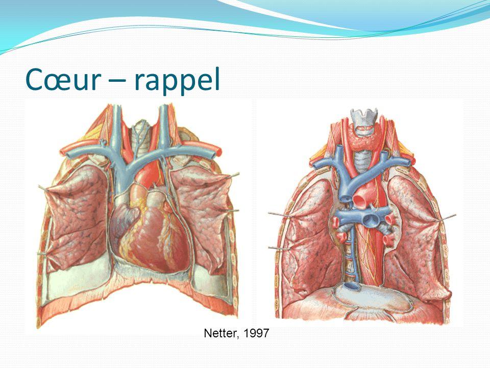 Cœur – rappel Le cœur a une inclinaison (213 deg à gauche) par rapport à l'apex Netter, 1997