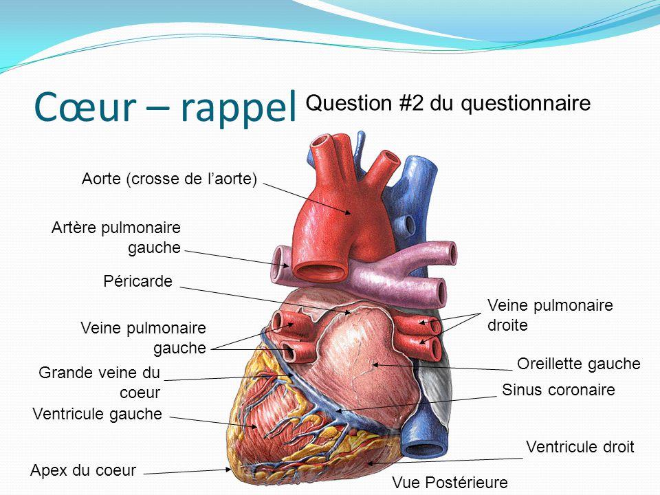 Cœur – rappel Question #2 du questionnaire Aorte (crosse de l'aorte)