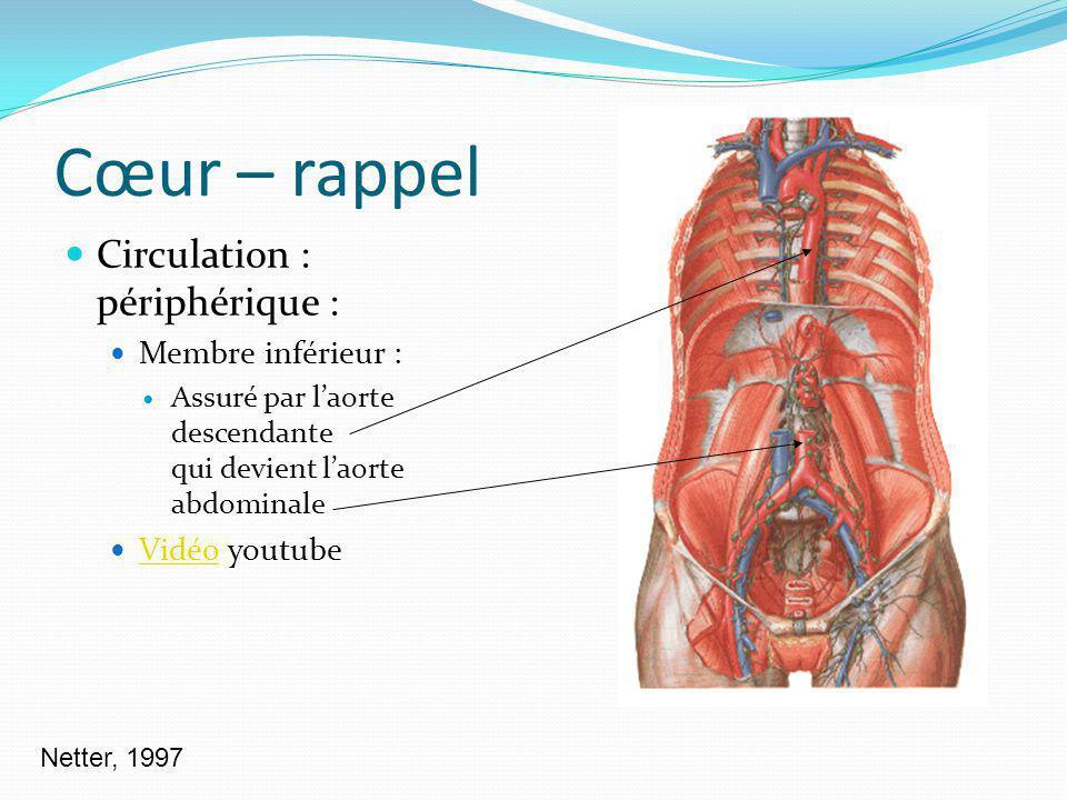 Cœur – rappel Circulation : périphérique : Membre inférieur :