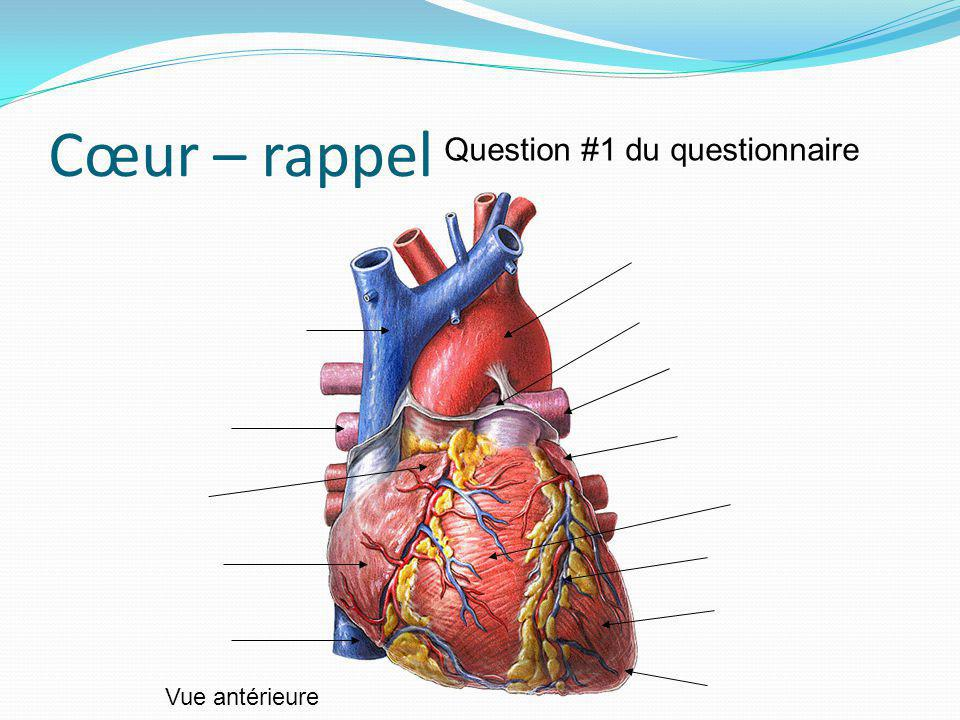 Cœur – rappel Question #1 du questionnaire Vue antérieure