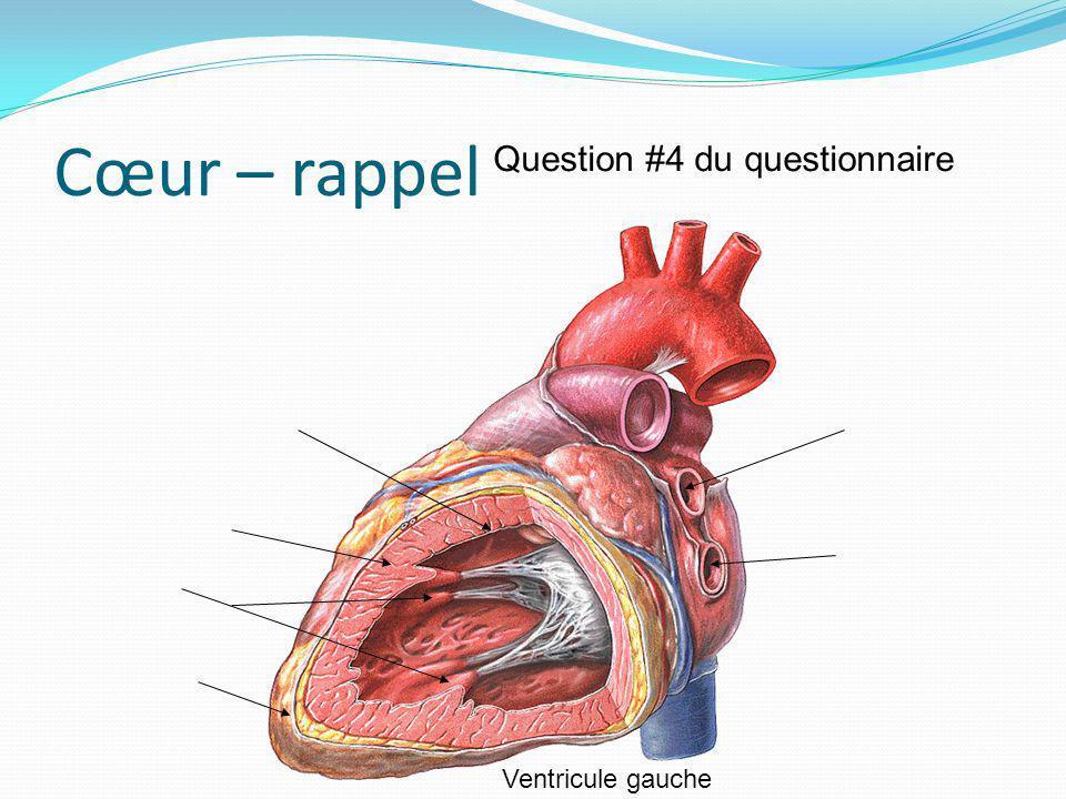 Cœur – rappel Question #4 du questionnaire Ventricule gauche