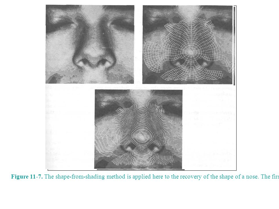 Figure 11-7. The shape-from-shading method is applied here to the recovery of the shape of a nose.