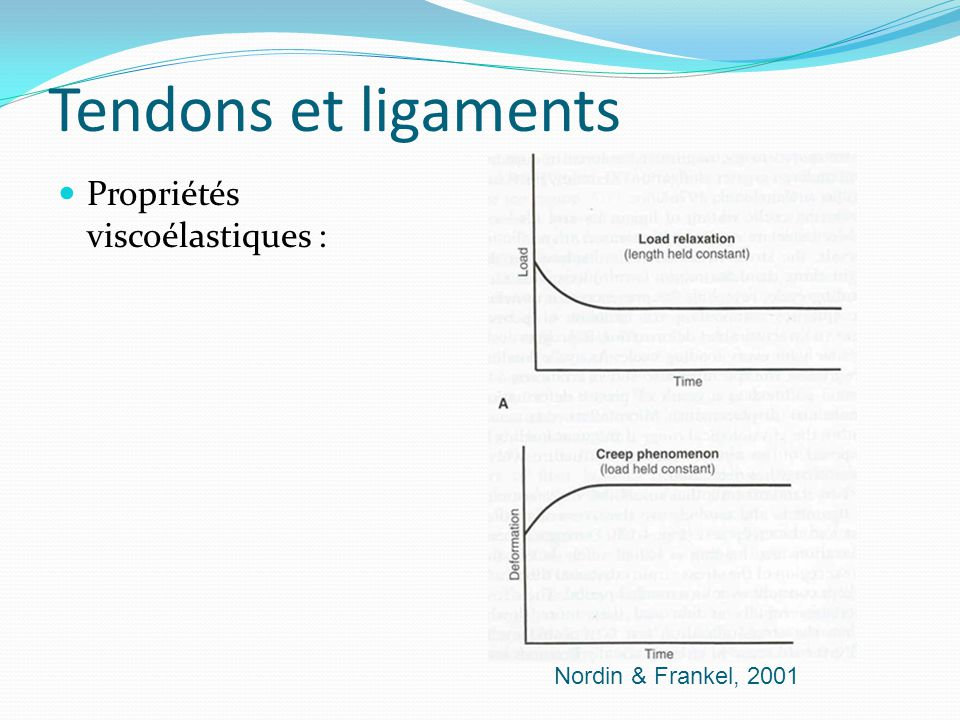 Tendons et ligaments Propriétés viscoélastiques :