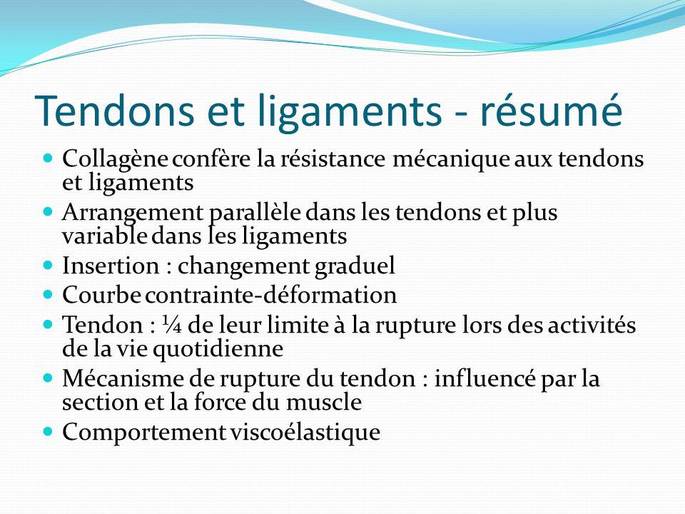 Tendons et ligaments - résumé