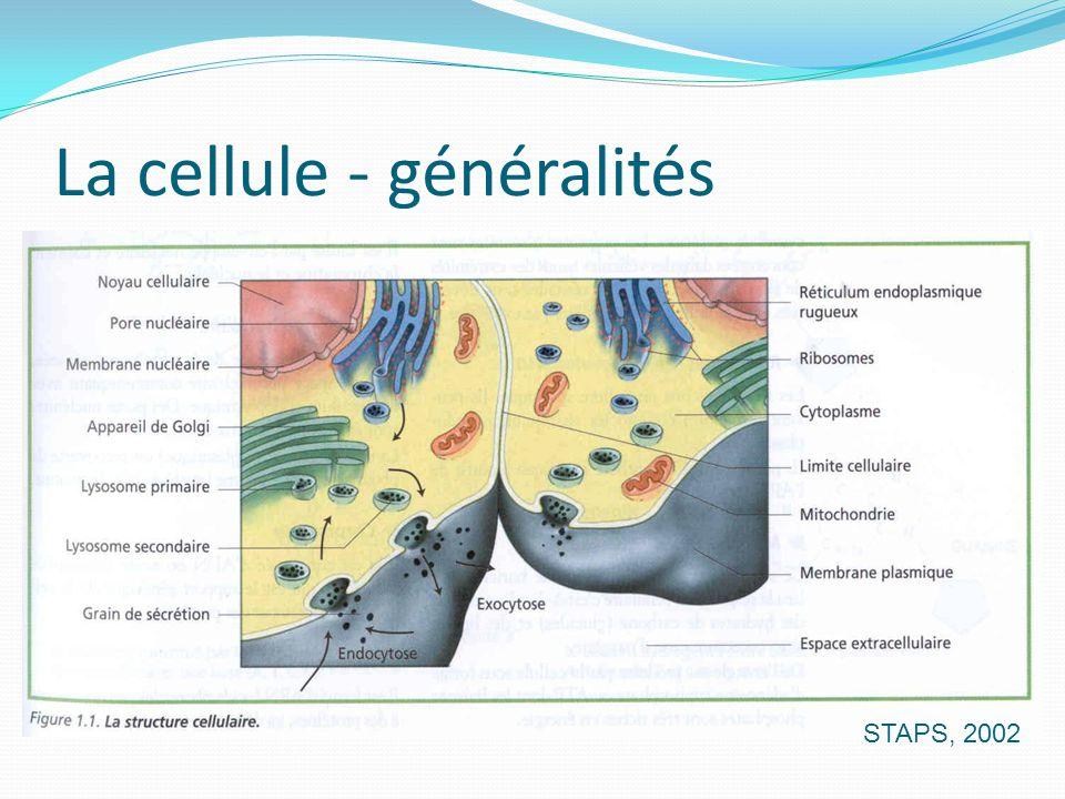 La cellule - généralités