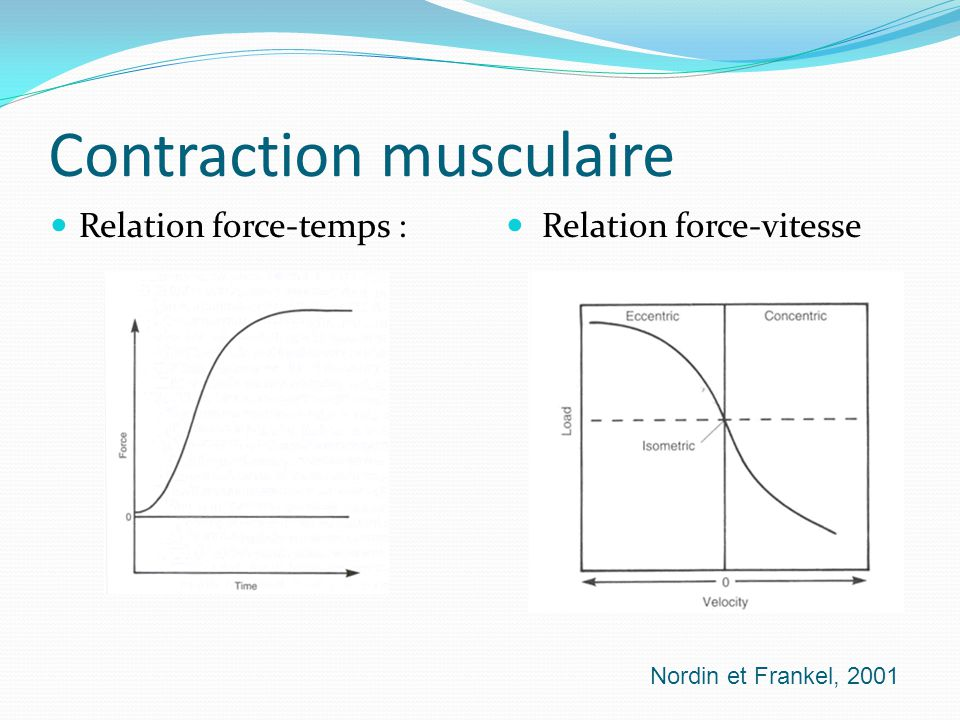 Contraction musculaire
