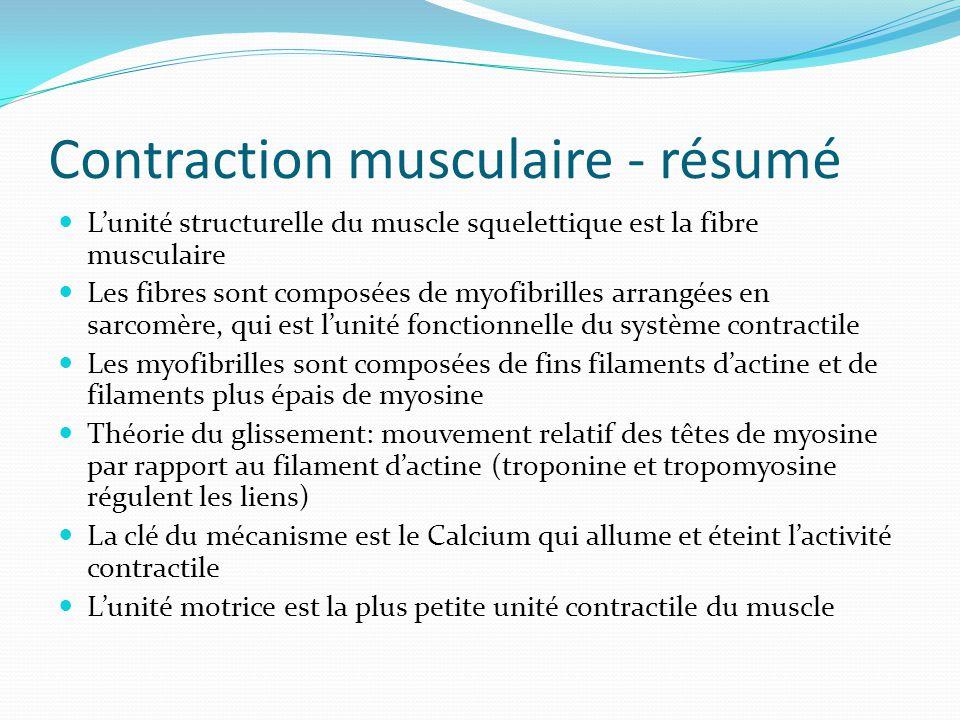 Contraction musculaire - résumé