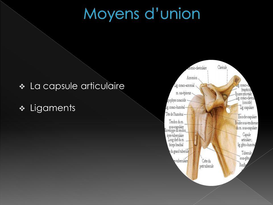 Moyens d'union La capsule articulaire Ligaments