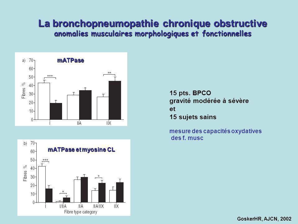 La bronchopneumopathie chronique obstructive anomalies musculaires morphologiques et fonctionnelles
