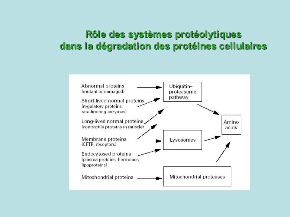 Rôle des systèmes protéolytiques