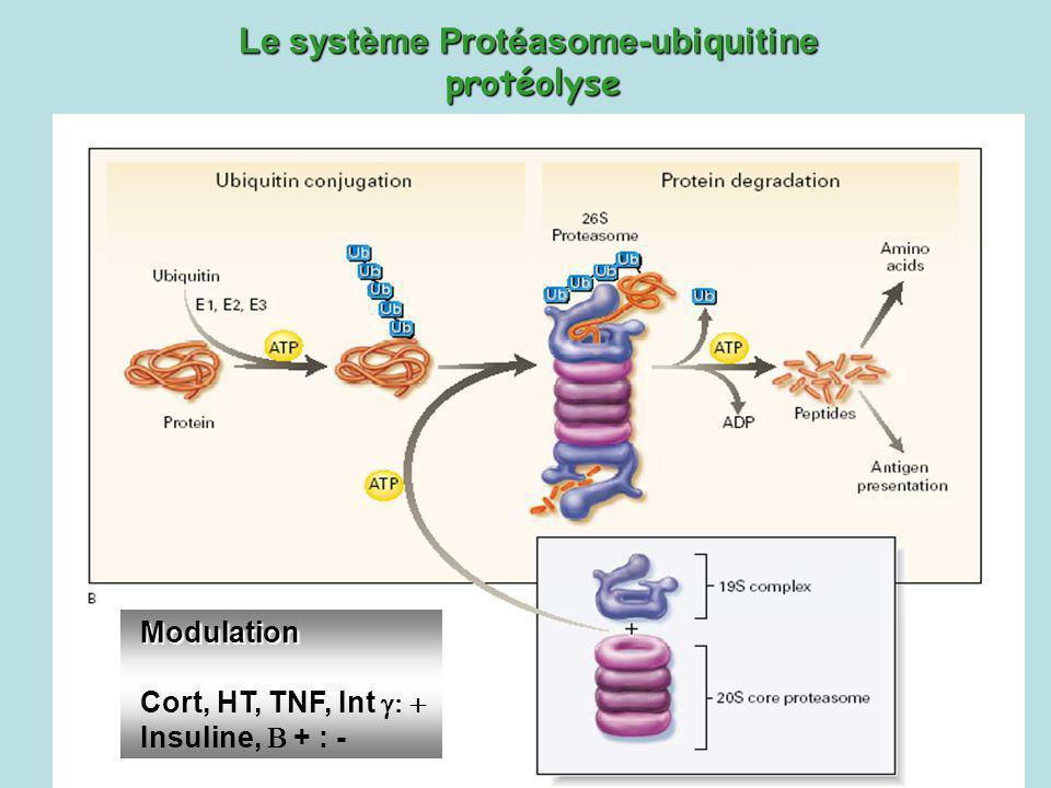 Le système Protéasome-ubiquitine