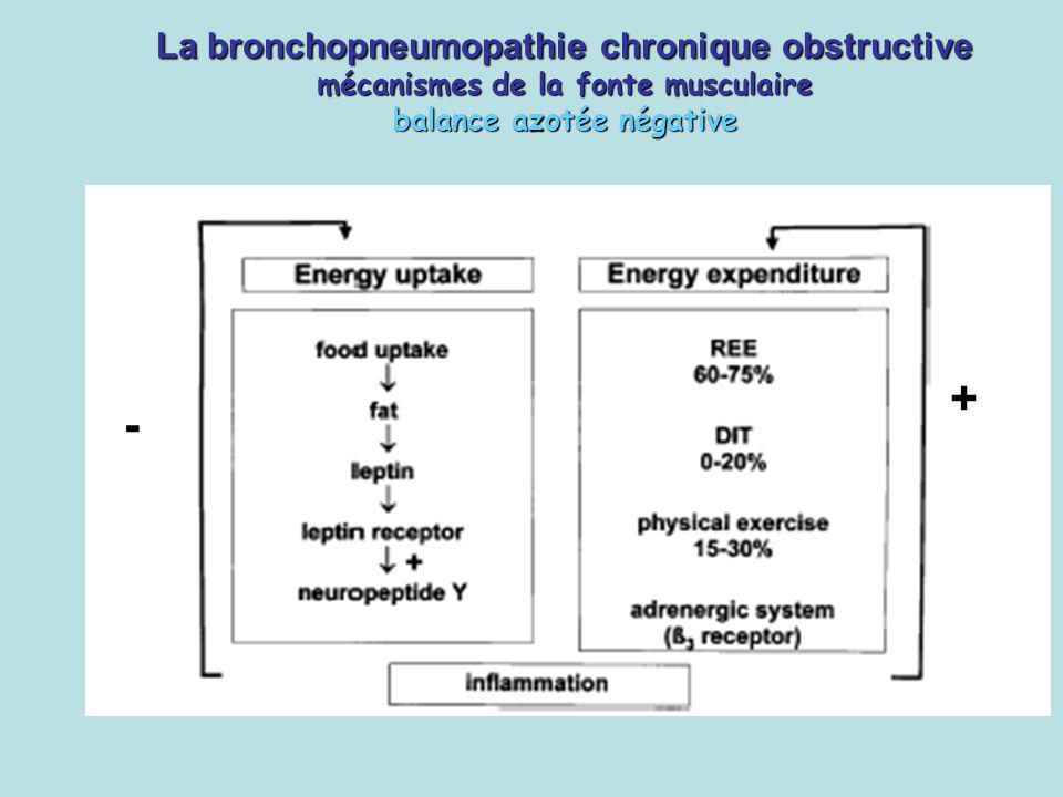La bronchopneumopathie chronique obstructive mécanismes de la fonte musculaire balance azotée négative