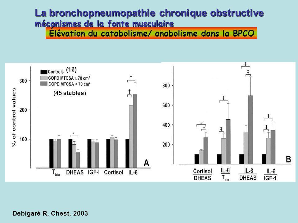 La bronchopneumopathie chronique obstructive mécanismes de la fonte musculaire Élévation du catabolisme/ anabolisme dans la BPCO