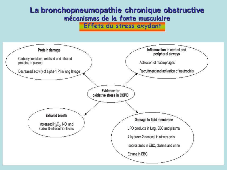 La bronchopneumopathie chronique obstructive mécanismes de la fonte musculaire Effets du stress oxydant
