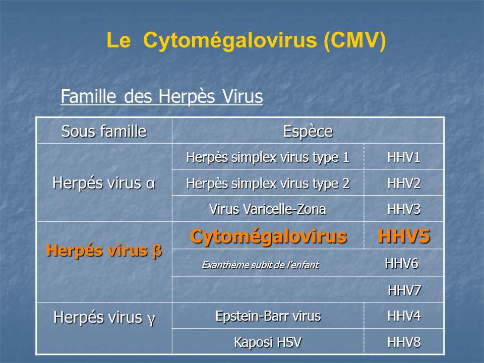 Le Cytomégalovirus (CMV)