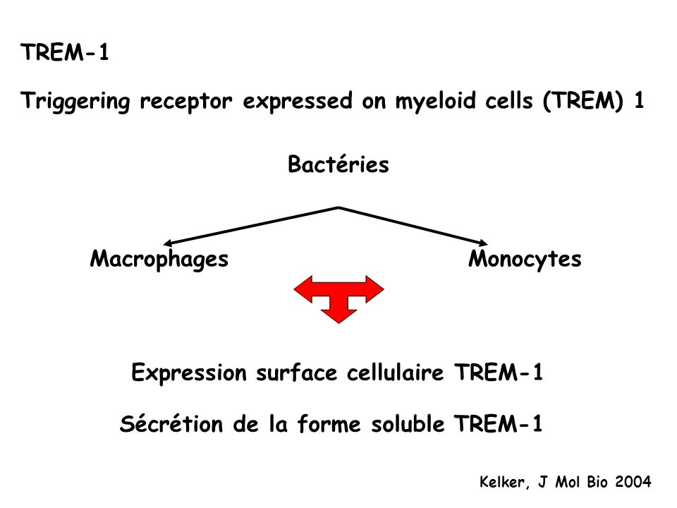 Triggering receptor expressed on myeloid cells (TREM) 1