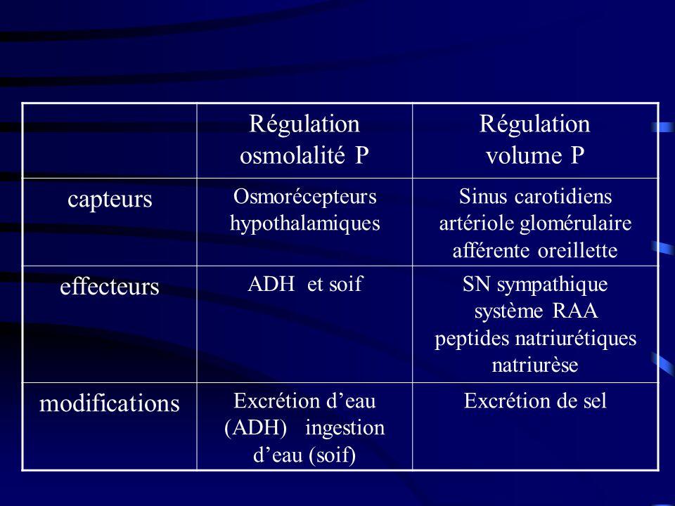 Régulation osmolalité P Régulation volume P capteurs