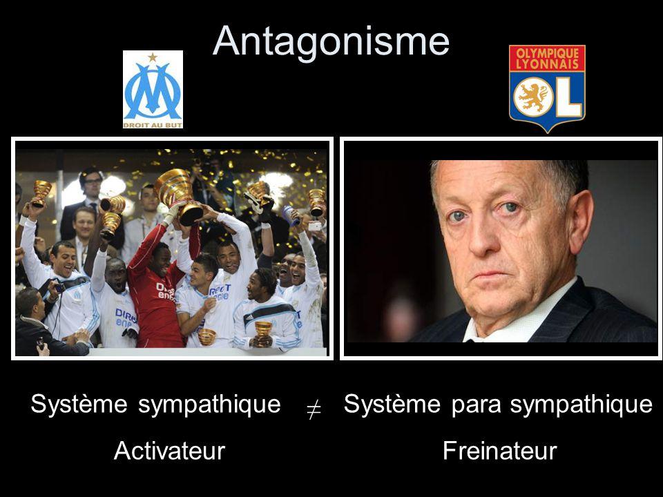 Antagonisme Système sympathique Activateur Système para sympathique