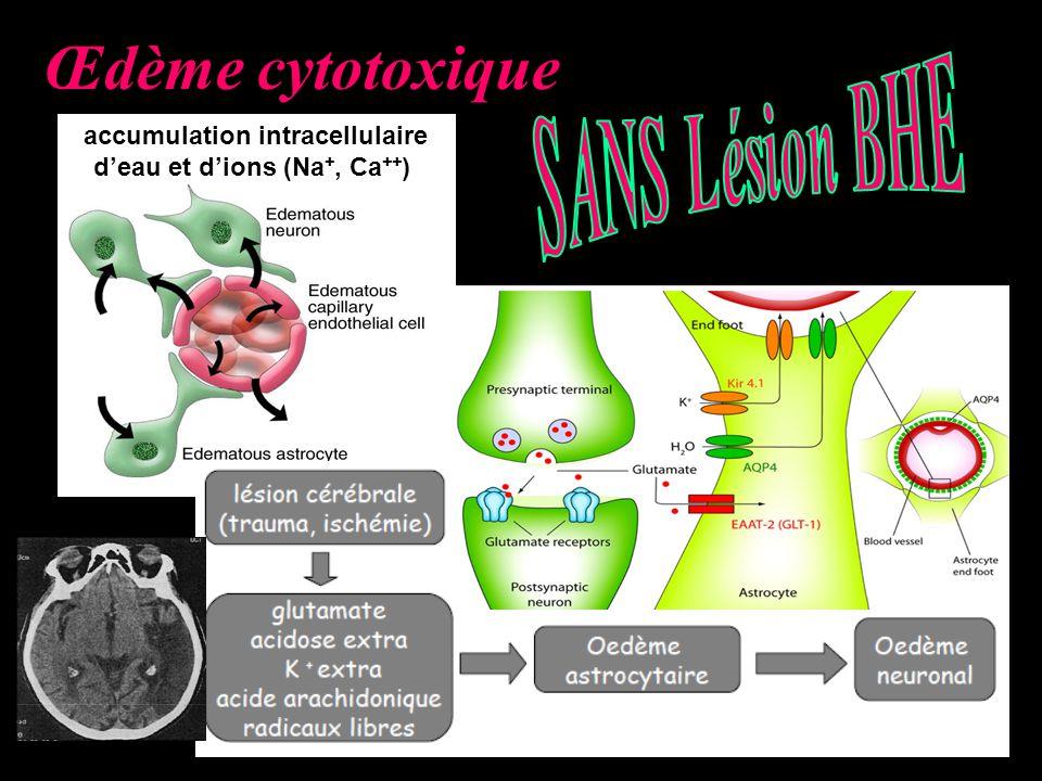 accumulation intracellulaire d'eau et d'ions (Na+, Ca++)