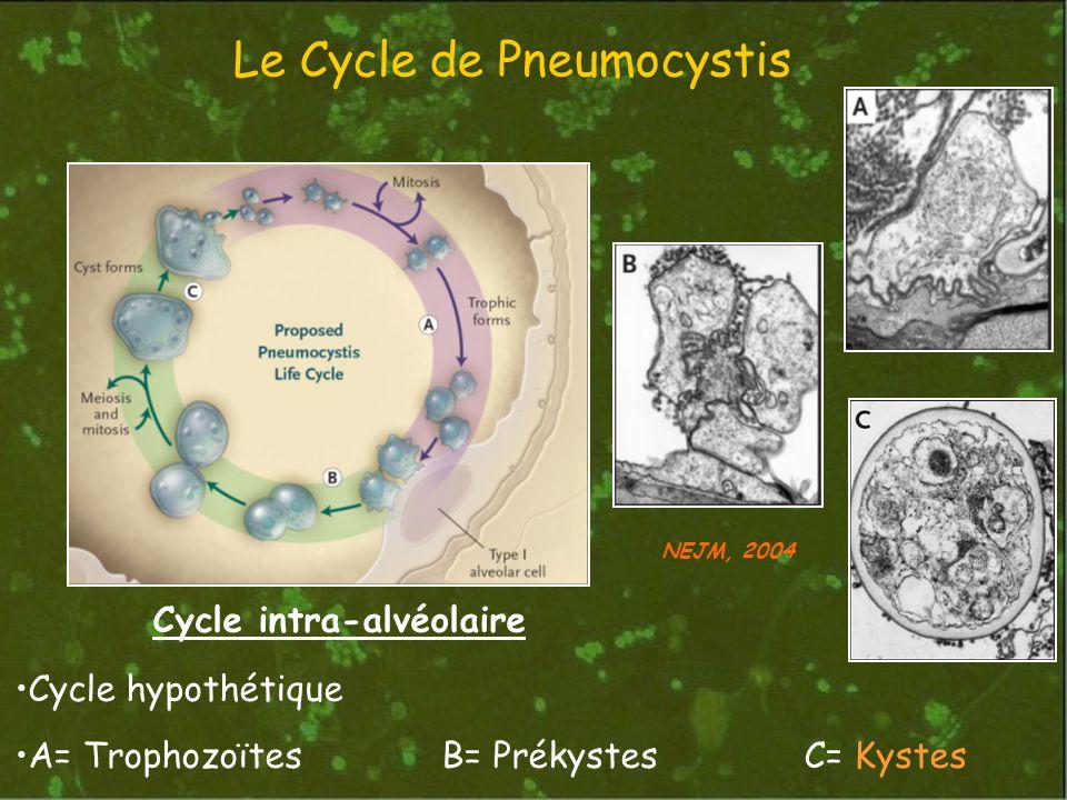 Le Cycle de Pneumocystis