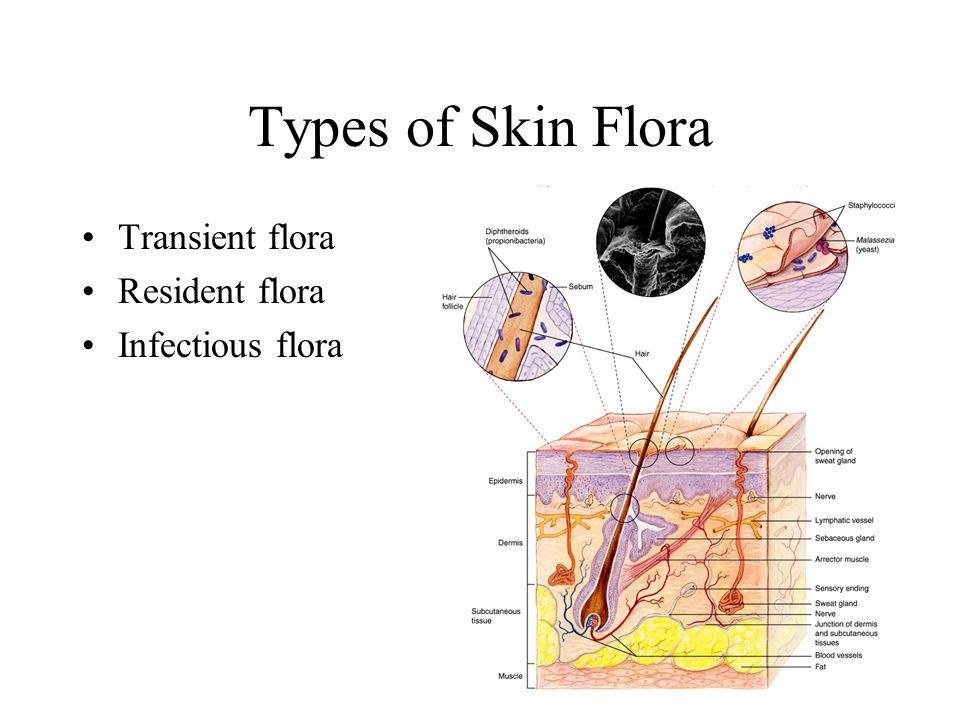 Types of Skin Flora Transient flora Resident flora Infectious flora