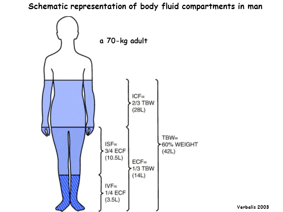 Schematic representation of body fluid compartments in man