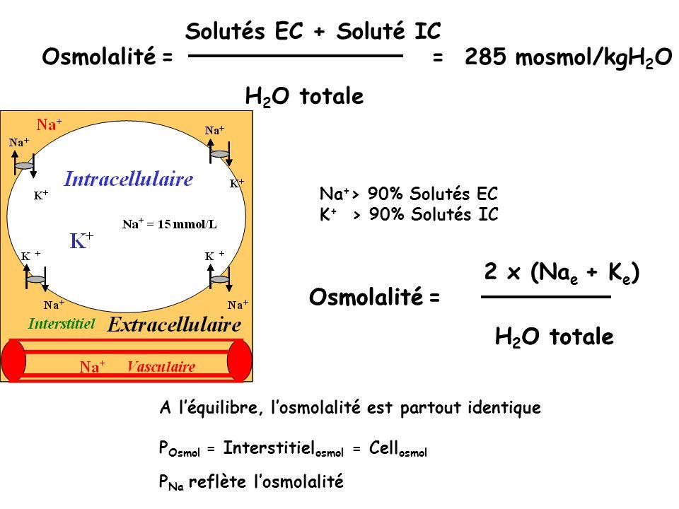 Osmolalité Solutés EC + Soluté IC = H2O totale = 285 mosmol/kgH2O