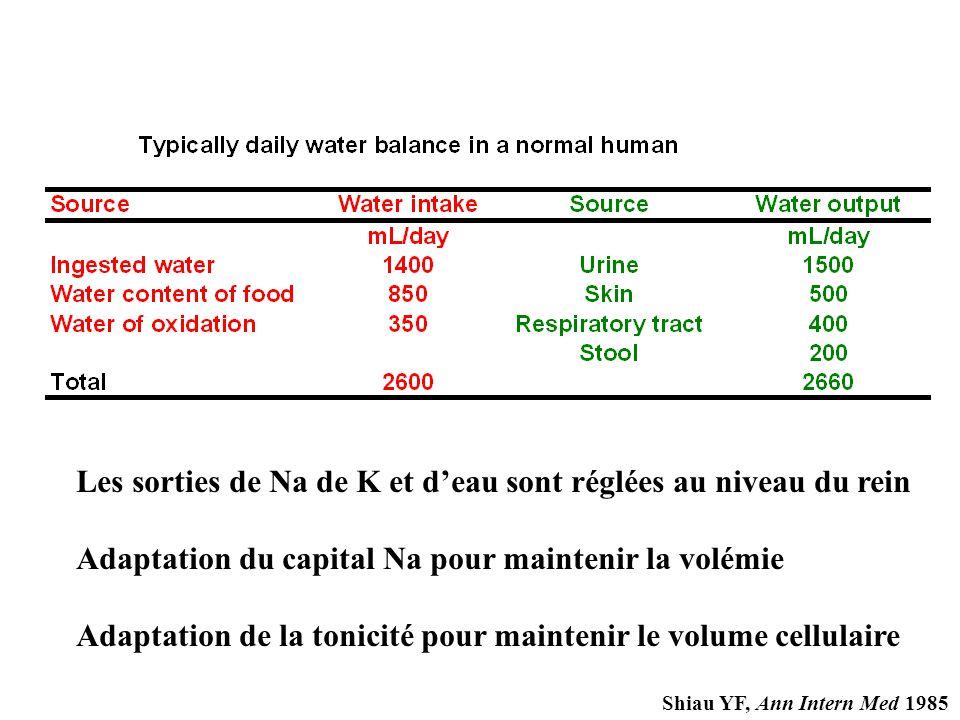 Les sorties de Na de K et d'eau sont réglées au niveau du rein