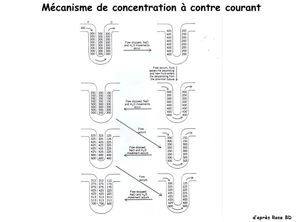 Mécanisme de concentration à contre courant