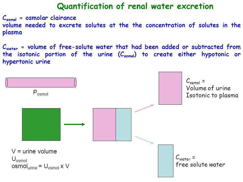 Quantification of renal water excretion