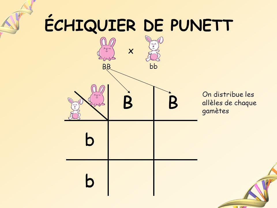B B B B B B b b b b b b ÉCHIQUIER DE PUNETT x BB bb