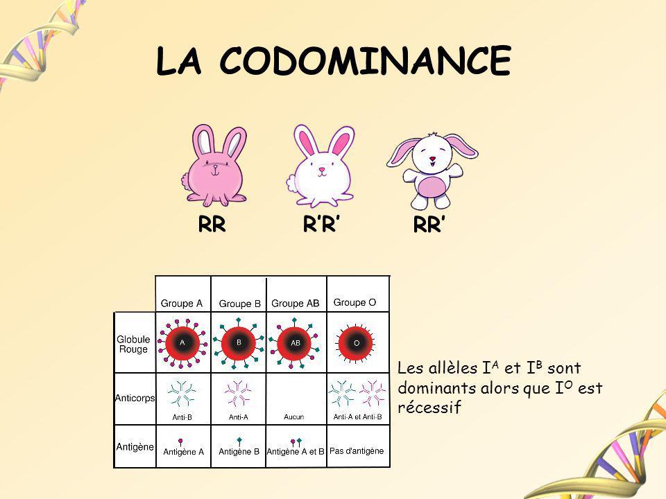 LA CODOMINANCE RR R'R' RR'
