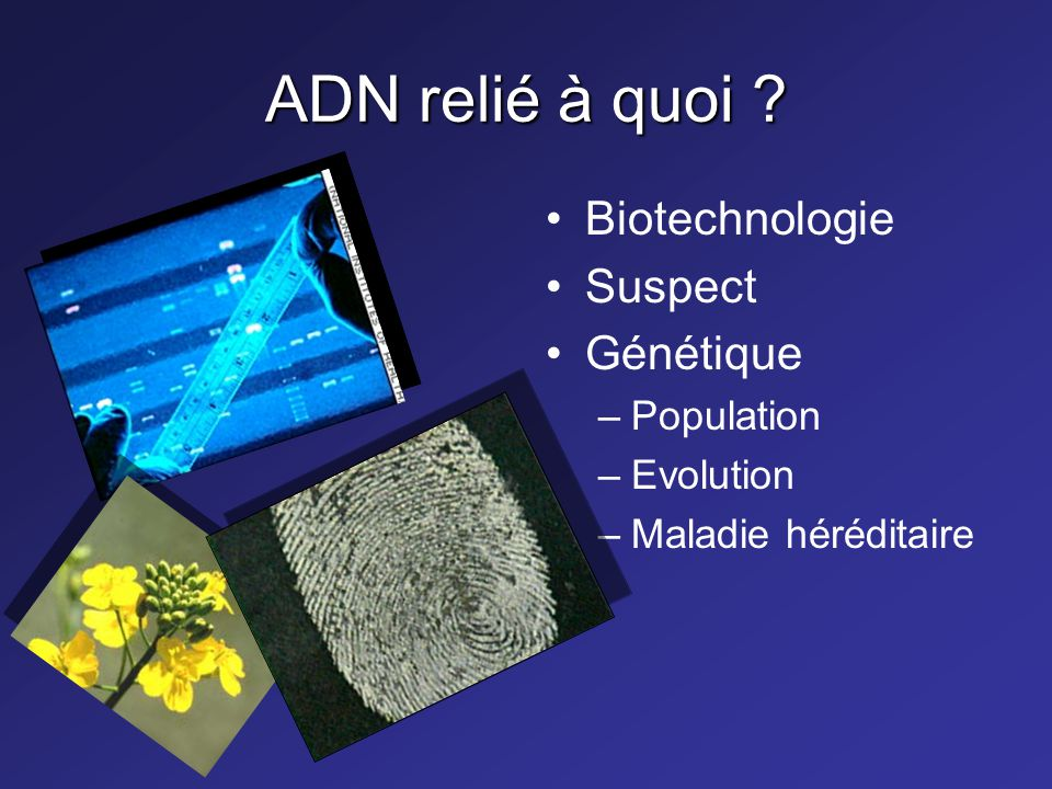 ADN relié à quoi Biotechnologie Suspect Génétique Population