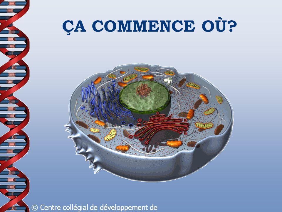ÇA COMMENCE OÙ © Centre collégial de développement de matériel didactique, 2008