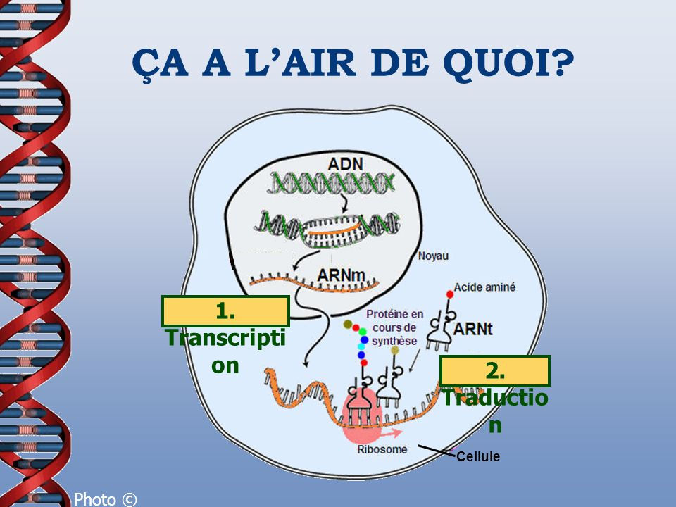 ÇA A L'AIR DE QUOI 1. Transcription 2. Traduction