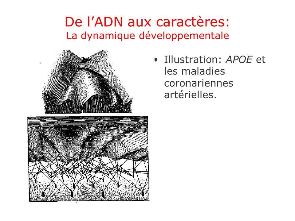 De l'ADN aux caractères: La dynamique développementale
