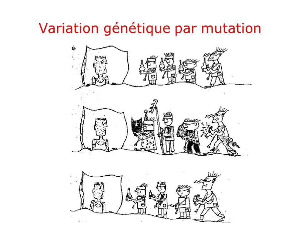 Variation génétique par mutation